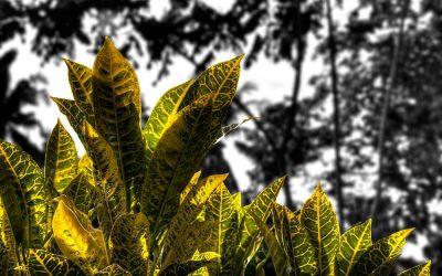Exotic Plant 5