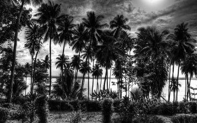 Palm Trees 3