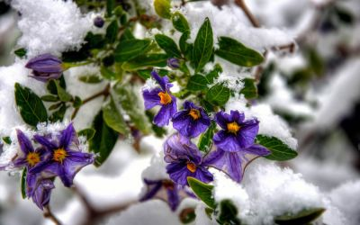 19 Dec 2013 : Snow Flower
