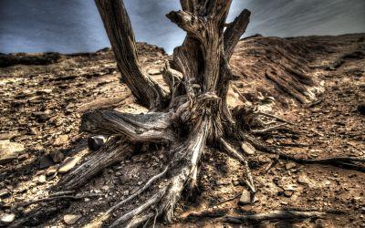 Petra – dry tree