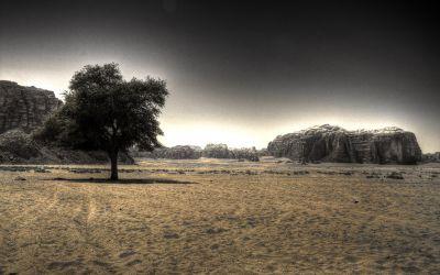 Wadi Rum 14