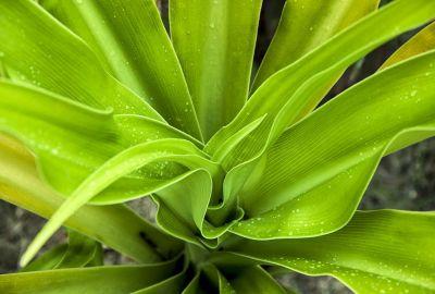 Exotic Plant 3