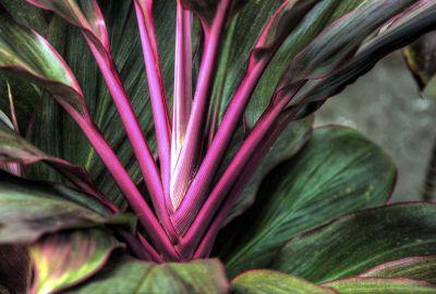 Exotic Plant 4